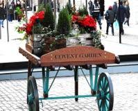 I 2017 Natali fioriscono le esposizioni nel giardino Londra Regno Unito del convento Fotografia Stock