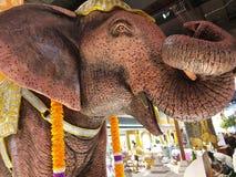 I naturlig storlek konkret elefanthuvud arkivfoton