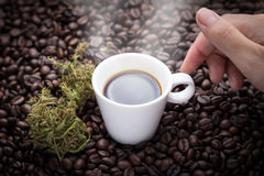 I need this cannabis coffee. Hand grabbing an ear cup of hot espresso as beside cannabis buds lay on many roasted coffee beans Stock Photography