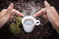 I need this cannabis coffee. Hand grabbing an ear cup of hot espresso as beside cannabis buds lay on many roasted coffee beans Stock Photos