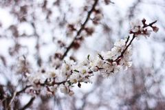 Spring time is nature at its best. I need you like a blossom needs rain, like the winter ground needs spring-to soothe my parched soul Royalty Free Stock Image