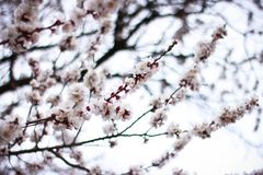 Spring time is nature at its best. I need you like a blossom needs rain, like the winter ground needs spring-to soothe my parched soul Stock Images
