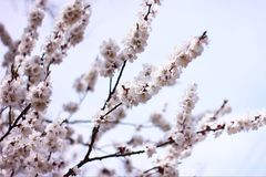 Spring time is nature at its best. I need you like a blossom needs rain, like the winter ground needs spring-to soothe my parched soul Royalty Free Stock Photography