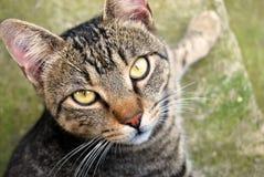 I nostri animali domestici Immagine Stock Libera da Diritti