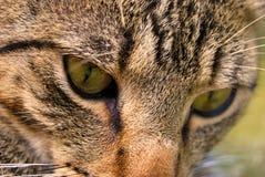 I nostri animali domestici Fotografia Stock