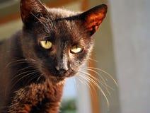 I nostri animali domestici Fotografia Stock Libera da Diritti