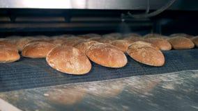 I pani freschi esce dal forno Concetto bollente del pane Fabbrica dell'alimento dell'interno stock footage