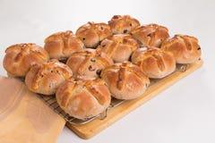 I panini trasversali caldi appena al forno/hanno cucinato su uno scaffale di raffreddamento del cavo Immagine Stock Libera da Diritti