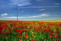 I papaveri rossi hanno archivato in Dobrogea con l'azienda agricola eolian del mulino a vento, Romania fotografia stock
