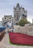 I papaveri visualizzano alla torre di Londra Fotografia Stock