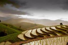i papongpians a terrazze del giacimento del riso maechaen il chiangmai Tailandia Fotografia Stock