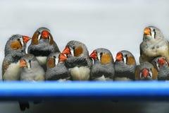 I pappagalli stanno sedendo in una gabbia da vendere immagine stock libera da diritti