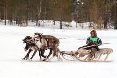 I partecipanti di rivestimento delle corse della renna immagine stock