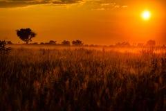 I pascoli di delta di Okavango hanno bagnato nell'alba africana arancio drammatica Fotografia Stock