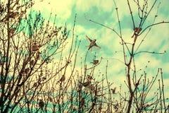 I passeri si siedono sui rami di un albero Immagine Stock Libera da Diritti
