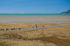 I pellicani stanno riposando su una spiaggia Fotografia Stock