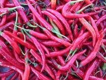 I peperoncini rossi Fotografia Stock Libera da Diritti