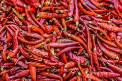 I peperoncini rossi secchi sono asciugati Fotografia Stock