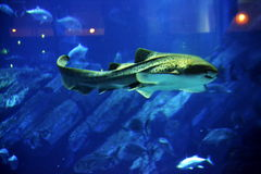 I pesci Fotografia Stock