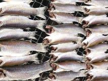 I pesci di mare dty fuori per cucinare immagini stock