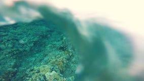 I pesci ed il tubo variopinti subacquei tropicali del Mar Rosso worm il corallo molle nella scogliera tropicale del Mar Rosso, Eg stock footage