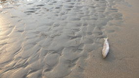 I pesci guasti sull'immagine della spiaggia? hanno montato con il simbolo decorato di biohazard Immagini Stock