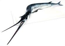 I pesci hanno veduto Fotografia Stock