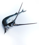 I pesci hanno veduto Immagine Stock Libera da Diritti