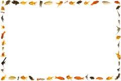 I pesci incorniciano isolato su priorità bassa bianca Fotografie Stock Libere da Diritti