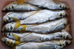 I pesci-pelada salati Fotografie Stock