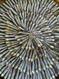 I pesci secchi Immagine Stock
