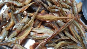 I pesci si asciugano Immagine Stock