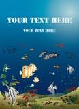 I pesci tropicali di larghezza dell'opuscolo basano dell'oceano Fotografia Stock Libera da Diritti