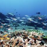 I pesci tropicali si avvicinano alla barriera corallina variopinta immagine stock libera da diritti