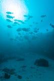 I pesci tropicali si avvicinano alla barriera corallina variopinta fotografia stock