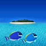 I pesci variopinti si avvicinano all'isola dell'atollo Immagini Stock Libere da Diritti