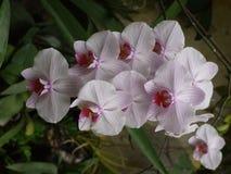 I petali bianchi delicati dei fiori hanno allineato con le linee sottili Guarda molto insolito e bello Immagini Stock Libere da Diritti
