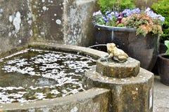 I petali caduti del fiore della ciliegia stanno galleggiando sull'acqua immagini stock libere da diritti