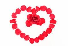 I petali di Rosa Fotografia Stock Libera da Diritti
