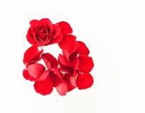 I petali di Rosa Immagine Stock