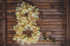 I petali fiorisce forma la cartolina del giorno delle donne della struttura dell'8 marzo Fotografia Stock Libera da Diritti