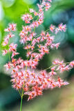 I petali luccicheranno nell'erbaccia di luce solare presto Immagini Stock Libere da Diritti