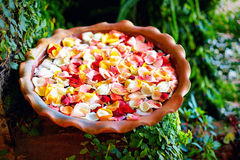 I petali rosa freschi in acqua lanciano, giardino dell'estate Fotografia Stock