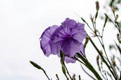 I petali si assottigliano e luce solare Fotografia Stock Libera da Diritti