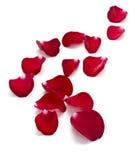 I petali sono aumentato Immagine Stock Libera da Diritti
