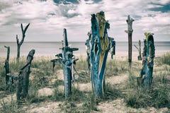 I pezzi colorati di tronchi di albero hanno fuso a terra sulla spiaggia baltica Fotografie Stock Libere da Diritti