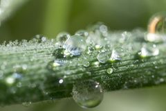 A drop, abstract, background, bright, clean, color, dew, drop, fresh, green, leaf, life, light, macro, natural, nature, rain Stock Photography