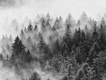 I picchi taglienti sono aumentato da nebbia rosa in valle lunga Immagine Stock Libera da Diritti