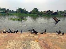 I piccioni godono dell'alimentazione dell'alimento dall'ospite fotografia stock libera da diritti