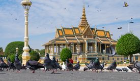 I piccioni nel quadrato davanti a Royal Palace Immagini Stock Libere da Diritti